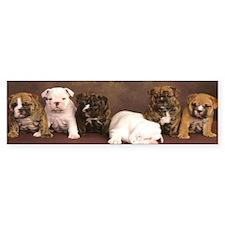Bulldog puppy Bumper Sticker