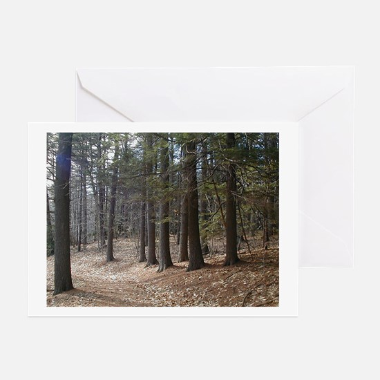Color Nature Photo Art Greeting Cards (Package of