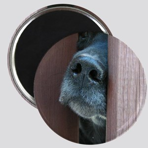 The Nose Knows Magnet