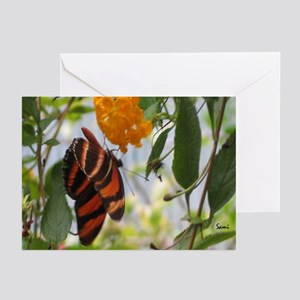 Orange & Black Butterfly Greeting Cards (Package