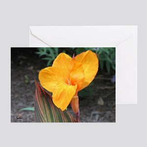 Orange Canna Blossum Greeting Cards (Pk of 10)