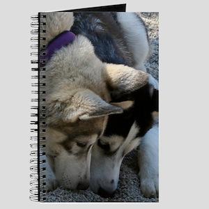 Nosy Journal