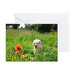 Clumber Spaniel Greeting Cards (Pk of 20)
