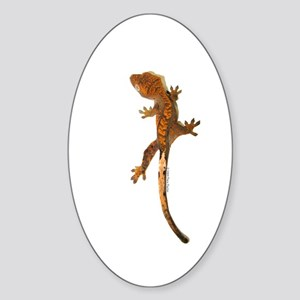 """Crested Gecko Climbing"" Oval Sticker"