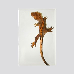 """""""Crested Gecko Climbing"""" Rectangle Magne"""