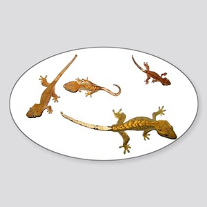Four Crested Geckos Oval Sticker