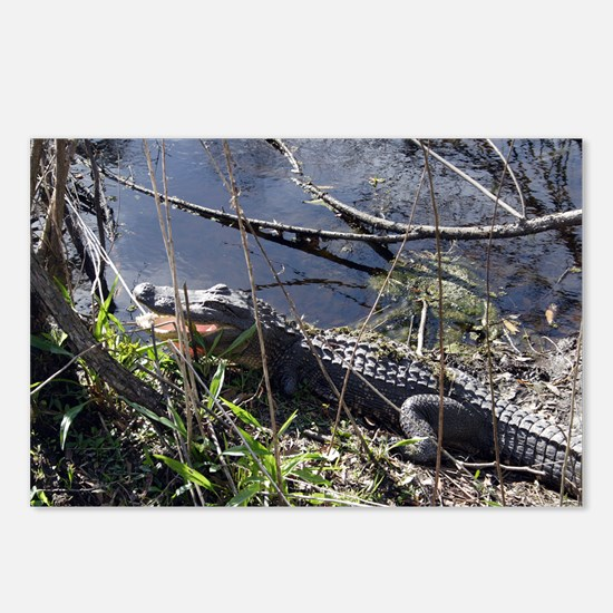 LOUISIANA GATOR - Postcards (Package of 8)