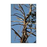 Old Snag Tree Mini Poster Print
