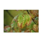 Fall Leaf Color Mini Poster Print