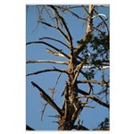 Old Snag Tree Large Poster