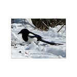 Black Billed Rocky Mountain Magpie 5'x7'ar