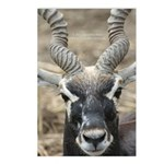 Deer 2 Postcards (Package of 8)