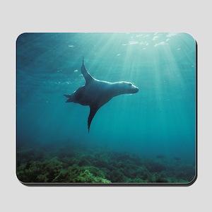 Sea Lion in Sunburst Mousepad