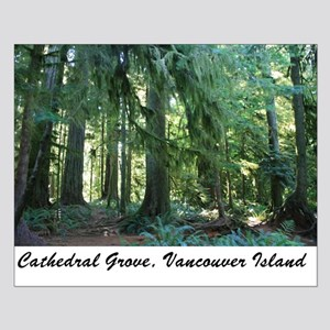 Cathedral Grove 30 Small Poster