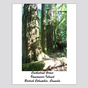Cathedral Grove 28 Small Poster