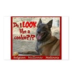 Malinois Mallomar Cookie Postcards (Package of 8)