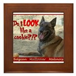 Malinois Mallomar Cookie Framed Tile
