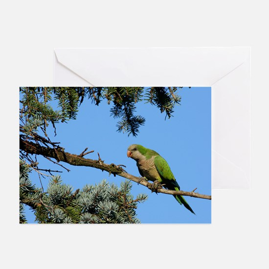 Monk Parakeet Greeting Cards (Pk of 10)