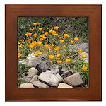 California Poppies Framed Tile