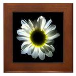 Daisy Flower Framed Tile
