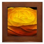 Yellow Ranunculus Framed Tile