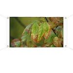 Fall Leaf Color Banner