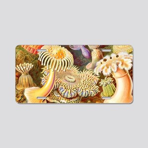 Sea Anemones, Ernst Haeckel Aluminum License Plate