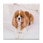 Cavalier King Charles In Bed Tile Coaster