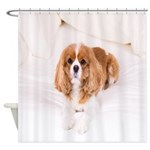 Cavalier King Charles In Bed Shower Curtain