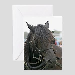 Black Percheron Horse Greeting Card