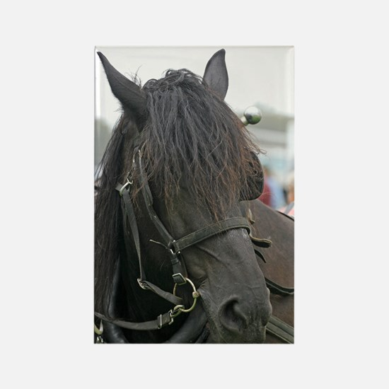 Black Percheron Horse Rectangle Magnet