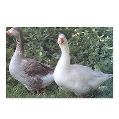 Pilgrim Geese Postcards (Package of 8)