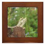Framed Tile, Mary Lovein photo, Hawaii