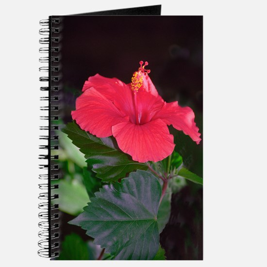 In Need Of A Bee Journal