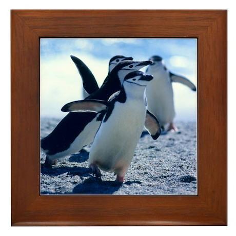Cute Penguins Framed Tile