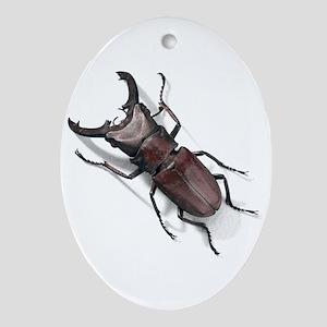Bug 19 Oval Ornament