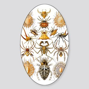 Spiders Sticker (Oval)