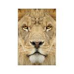 Lion Face Magnets