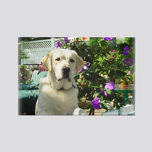 Bogart's Yellow Lab Rectangle Magnet