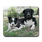 Border Collie Puppy and Friend
