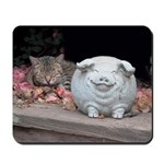 Cat Napping with Clay Pig
