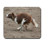 Galloping Red Border Collie
