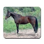 Bay Hunter Horse