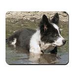 Puppy in Pond