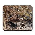 Rattlesnake in grass