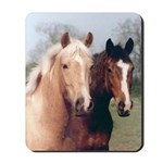 Two Horse Friends