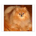Orange Pomeranian(Tucker) Small Poster