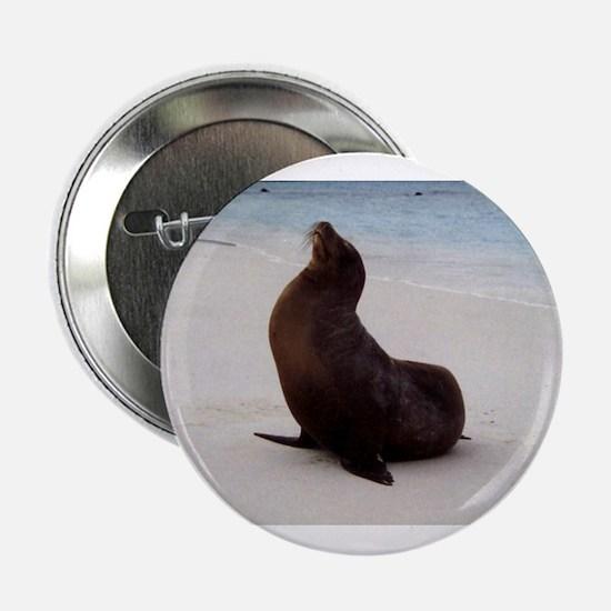 """GALAPAGOS SEA LION 2.25"""" Button"""