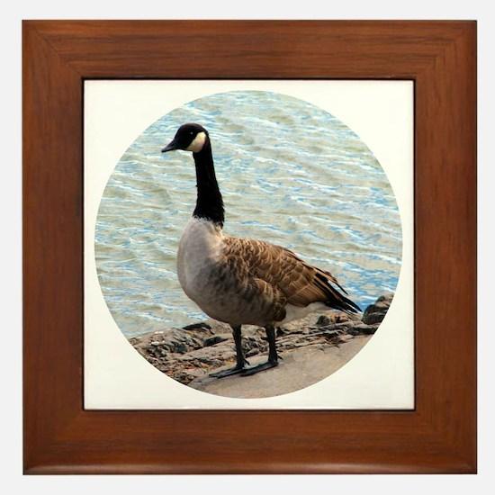 Canadian Goose- Framed Tile
