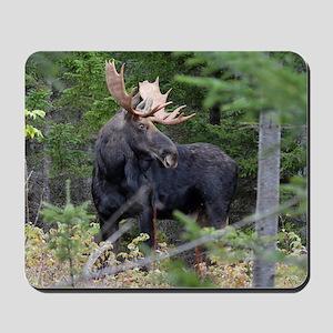 Young Moose Mousepad